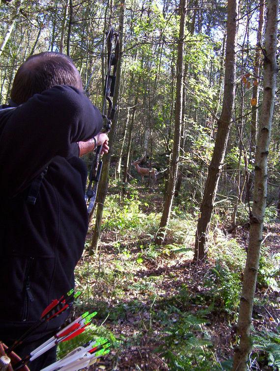 3D Schütze beim Zielen auf einen Hirsch